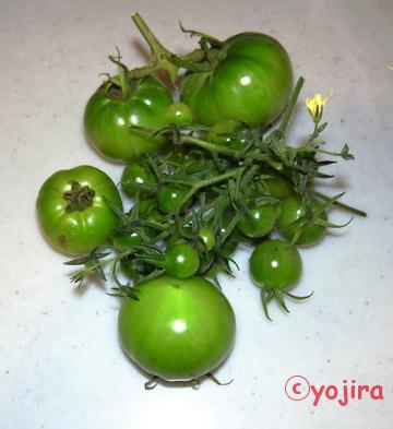 Tomato20131212